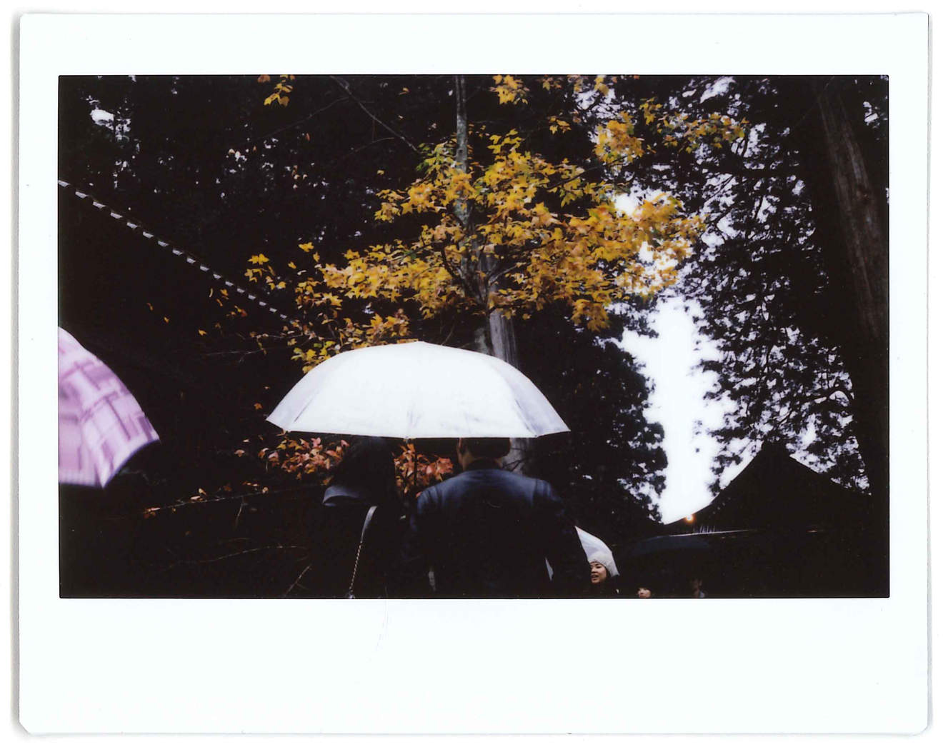 "Instant photo for Day 56 of ""A Year in an Instant"" by Nuno Coelho Santos"