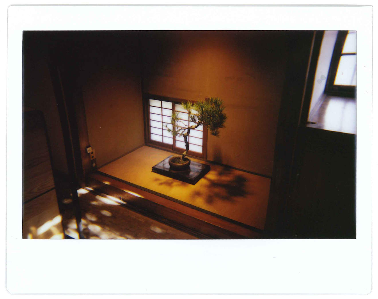 """Instant photo for Day 68 of """"A Year in an Instant"""" by Nuno Coelho Santos"""